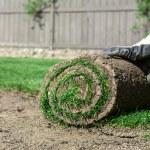 novo gramado — Fotografia Stock  #42556619