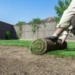 nový trávník — Stock fotografie #42556967