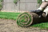 New lawn — Stock Photo