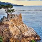 ������, ������: Cypress Tree