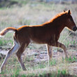 Foal on summer pasture — Stock Photo #23183672