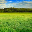 Stock Photo: Green meadow, forest and blue sky