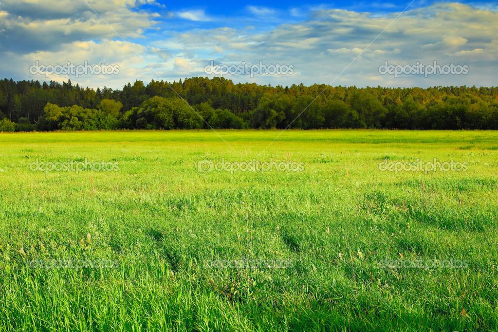 绿色草原、 森林和蓝蓝的天空 — 图库照片#24225809
