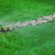 Sprinkler of automatic watering — Stock Photo #26394155