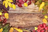 Autumn leaves on old wood — Stock Photo