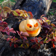 Halloween pumpkin in autumn leaves — Stock Photo #33113007