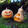 Still life with halloween pumpkins — Stock Photo #33113455