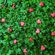 Stock Photo: Red Hearts on green grass