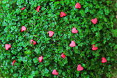Red Hearts on the green grass — Stockfoto