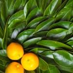 Three calamondin citrus fruits — Stock Photo #39938853