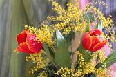 Stillleben mit roten tulpen yellow mimosa — Stockfoto