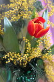 Still-life with red tulips yellow odorous mimosa — Stock Photo