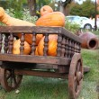 Wagon full of pumpkins — Stock Photo