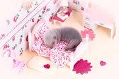 Ferret baby in pop huis — Stockfoto