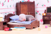 Ferret baby in doll house — 图库照片
