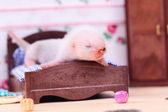 Furão bebé em casa de boneca — Foto Stock