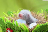 Ferret baby in the nest of hay — Foto de Stock