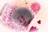 Hurón bebé en casa de muñecas — Foto de Stock