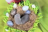 Fret baby in het nest van hooi — Stockfoto