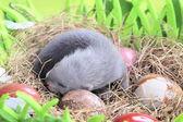 Fretka dítě v hnízdě sena — Stock fotografie