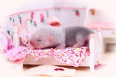 Ferret baby in doll house — Stock Photo