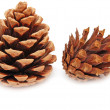 Stock Photo: Two pine cones