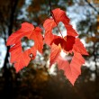 Three autumn leaves — Stock Photo #33370747