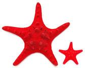 Två röd sjöstjärna — Stockfoto
