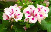 Flower — Stock Photo
