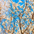 Blooming tree — Stock Photo