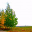 Yellow and green trees — Stock Photo