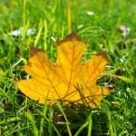 Yellow leaf — Stock Photo #34374861
