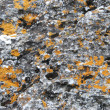 Stock Photo: Mold on rocks