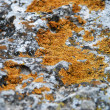 Mold on the rocks — Stock Photo