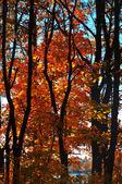 žluté stromy — Stock fotografie
