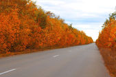 Largo camino. — Foto de Stock