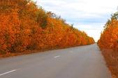 Long road. — Zdjęcie stockowe