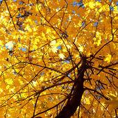 Podzim — Stock fotografie