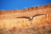 Seagull in the mountains on the blue sky — Stock Photo