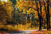在黄色的树路径 — 图库照片