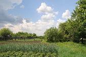 Rural landscape in the garden — 图库照片