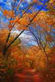 Paisaje del parque de otoño — Foto de Stock