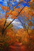 Podzimní park krajina — Stock fotografie