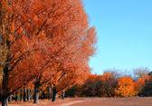 Hösten — Stockfoto
