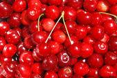 Cherries background — Stock Photo