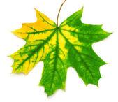 Желтый лист — Стоковое фото
