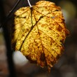 Yellow leaf — Stock Photo #35309579