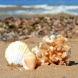 Shells and coral — Stock Photo