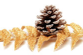 Branch of fir and pine cone — Стоковое фото