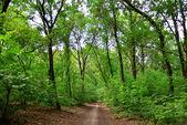 Pfad im grünen wald — Stockfoto